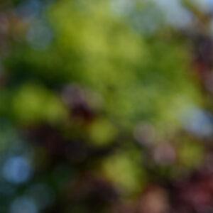 Kies een achtergrondkleur voor een professionele Linkedin-foto's en portretfotografie in Den Haag